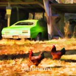 Stray Hen Strut