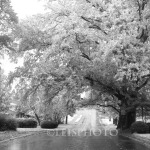 Cary-Infrared-3