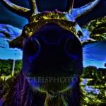 Deer-NightglowM