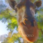 Giraffe-1M